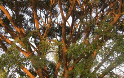 Acuerdo de distribución con 'White Oak India'